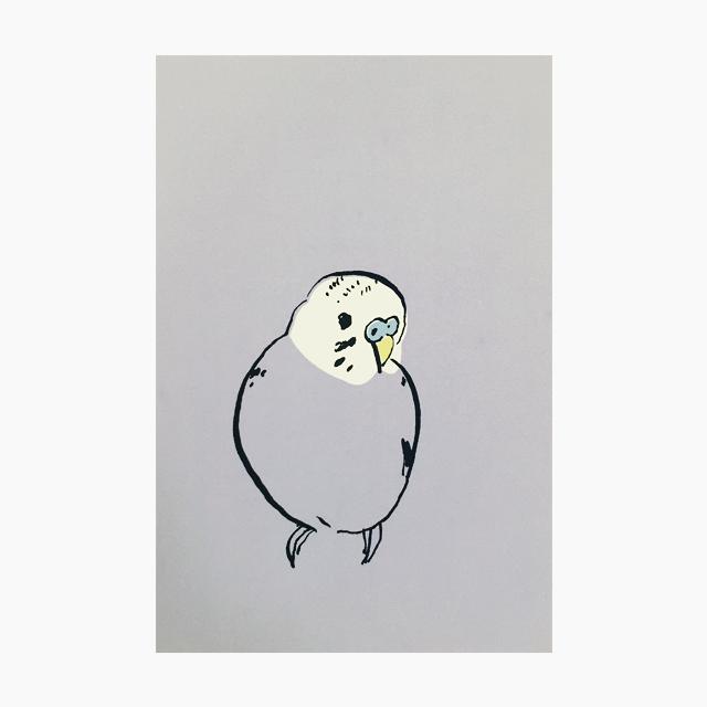 IROTORIDORI ポストカード(セキセイインコ)