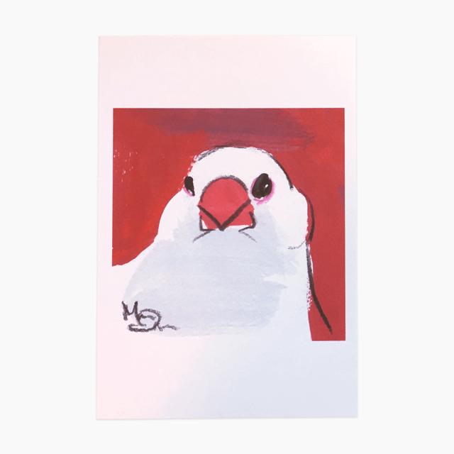 文鳥 ポストカード