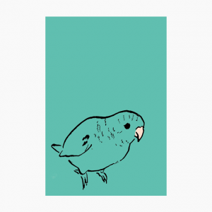 IROTORIDORI ポストカード(サザナミインコ)