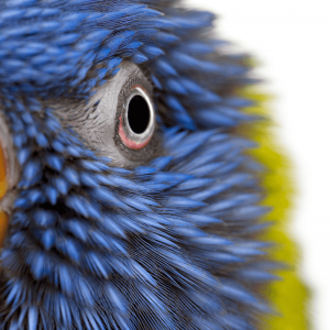 鳥さんから見た世界の様子