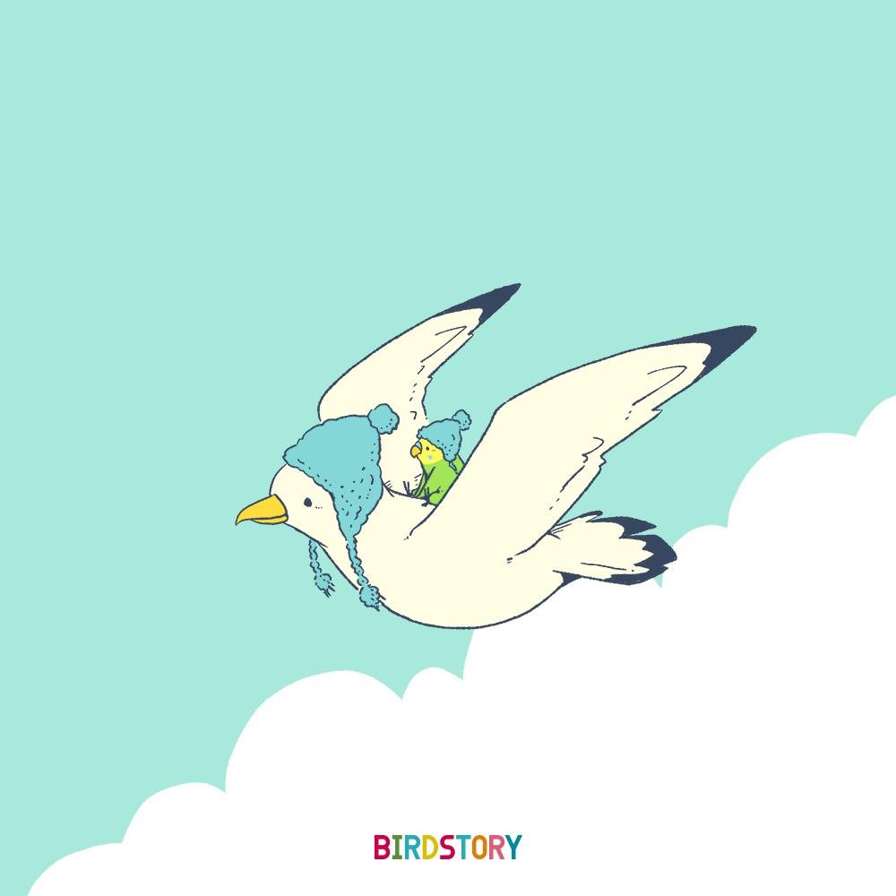 鳥フェス横浜 カモメ ハウスクエア横浜