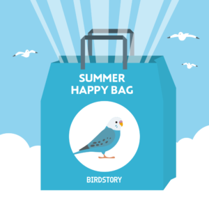 サマーハッピーバッグ 夏の福袋 BIRDSTORY セキセイインコ