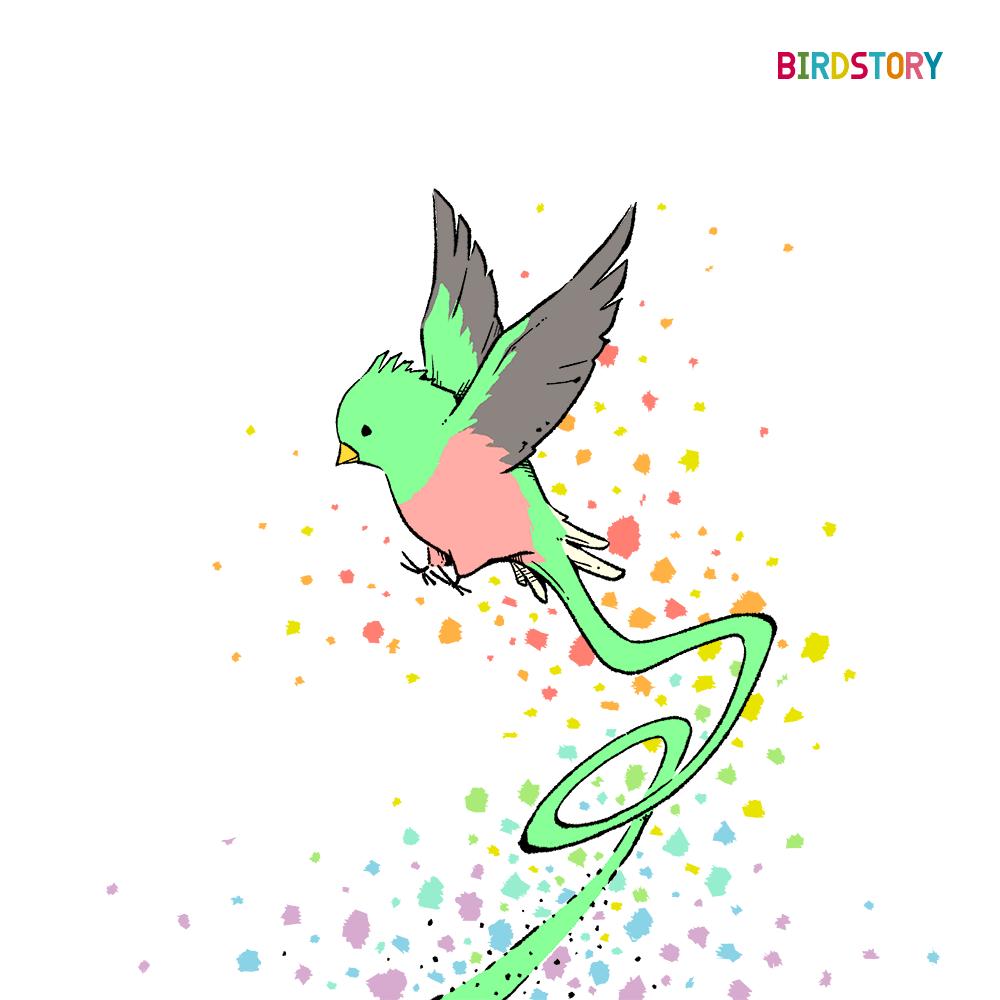 ケツァール quetzal コスタリカ イラスト BIRDSTORY