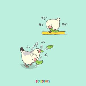 文鳥 小松菜 食べ方 イラスト 菜っ葉の日 バードストーリー