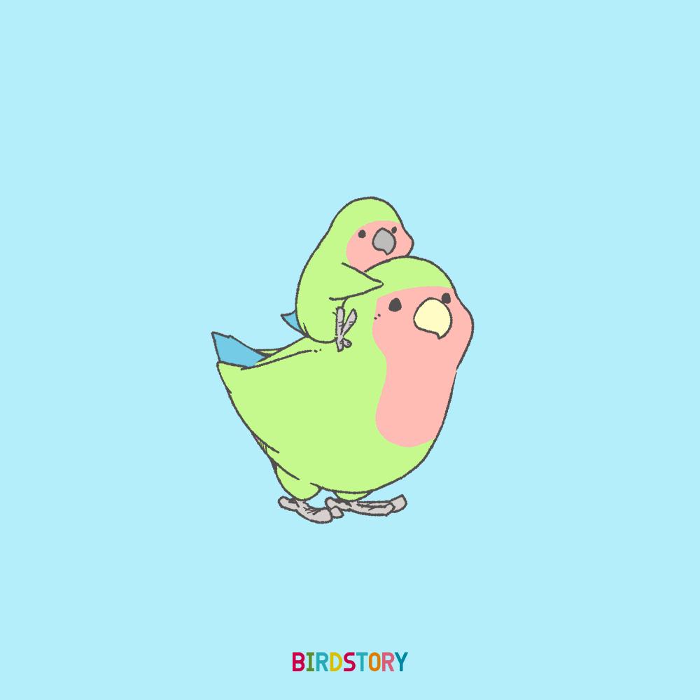 育児の日 毎月12日 コザクラインコ BIRDSTORY