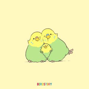 いい夫婦の日 セキセイインコのつがい親子イラスト BIRDSTORY
