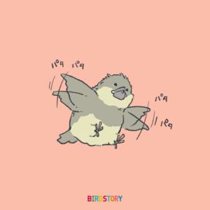 文鳥ヒナの飛ぶ練習イラストBIRDSTORY