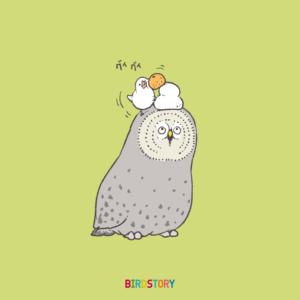 福の日カラフトフクロウと文鳥と鏡餅
