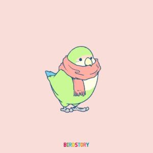 コザクラインコ マフラーイラストBIRDSTORY