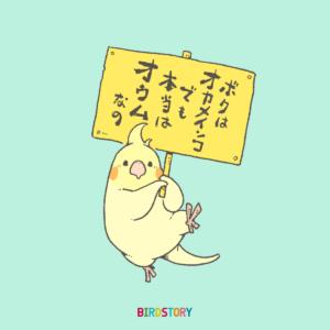 オカメインコ 本当はオウム 逸話の日 BIRDSTORY