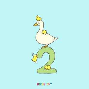 2月スタート アヒル ヒヨコ BIRDSTORY