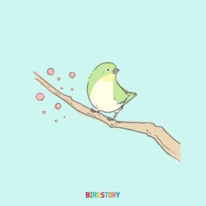 メジロ 立春 イラスト BIRDSTORY