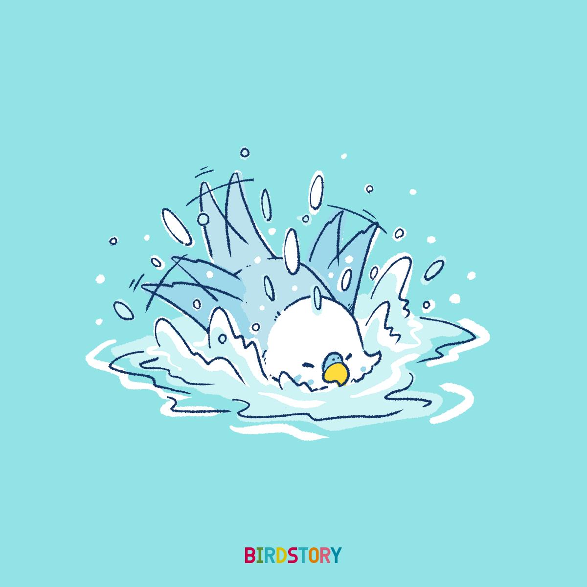 お風呂の日 水浴び セキセイインコのイラスト