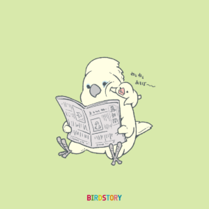 新聞 タイハクオウム 白文鳥イラスト