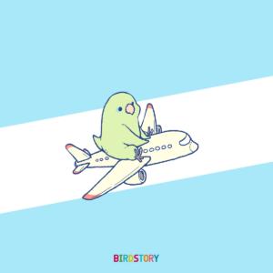 世界一周記念日 日本航空JAL マメルリハ