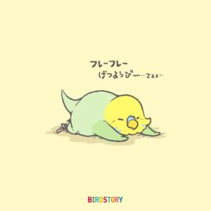 月曜日応援団 セキセイインコ BIRDSTORY