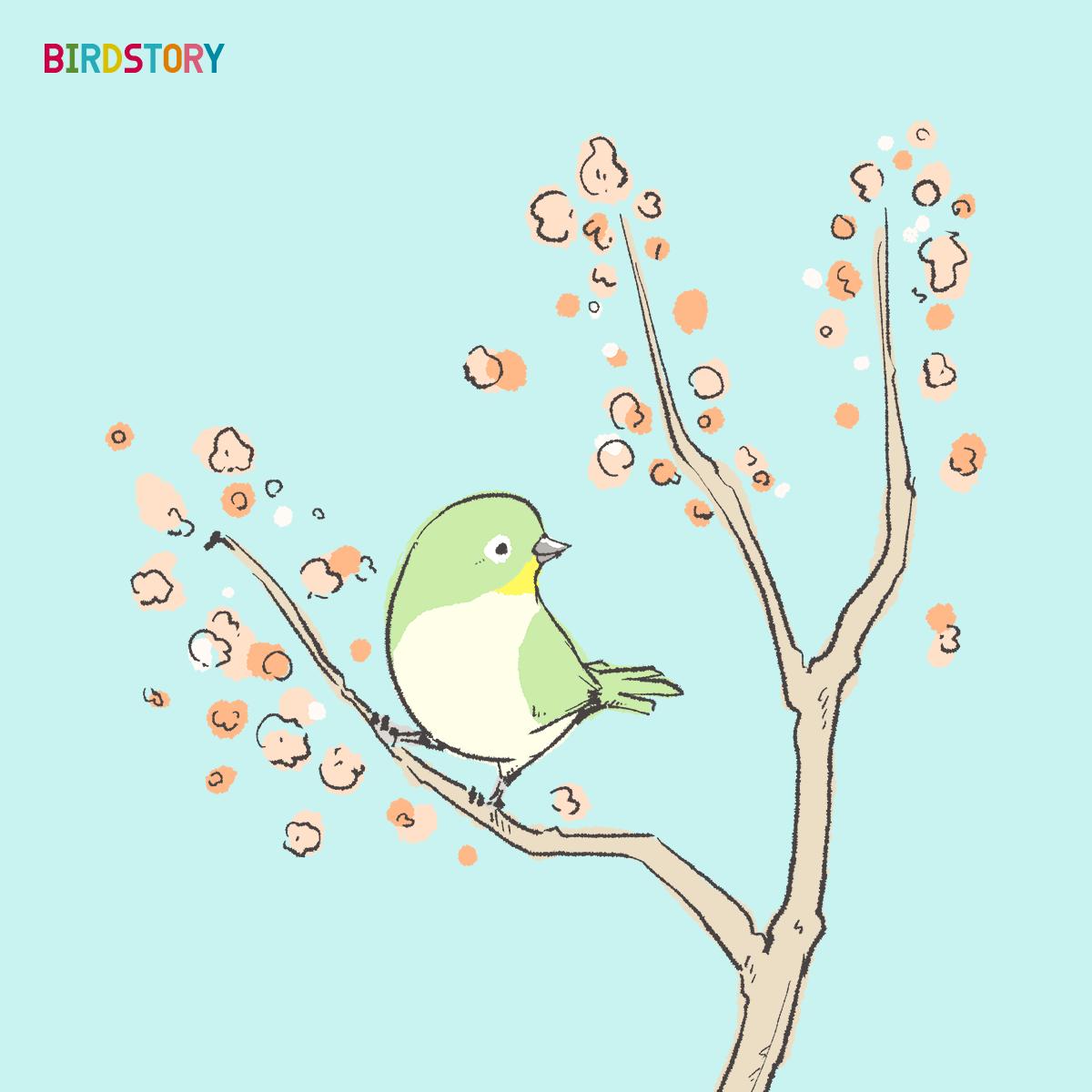 桜開花 咲き始め メジロイラスト