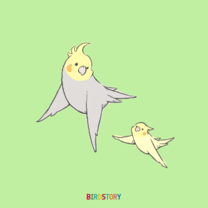 放鳥お散歩オカメインコ BIRDSTORY