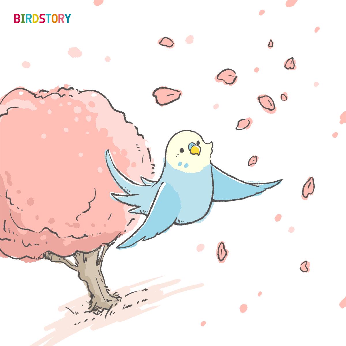 さくらの日 桜お花見セキセイインコのイラスト