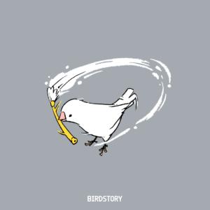 白の日 白文鳥 BIRDSTORY