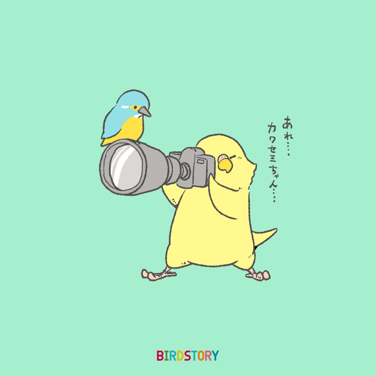 カワセミ野鳥撮影 フォトの日 BIRDSTORY