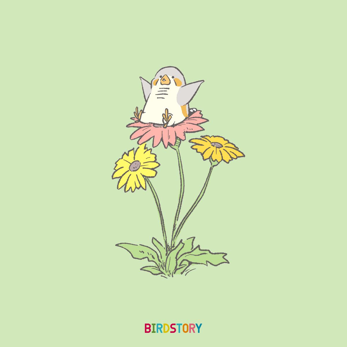 ガーベラ記念日 良い花キンカチョウ