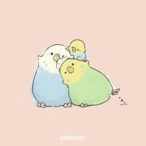 よい夫婦の日 つがいセキセイインコ BIRDSTORY