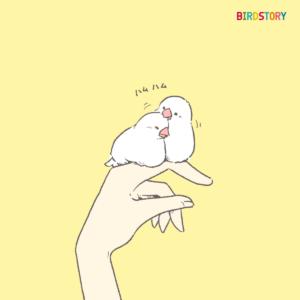 幸せをつなぐ日 手乗り白文鳥