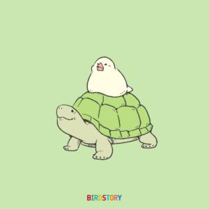 世界亀の日 World Turtle Day カメ