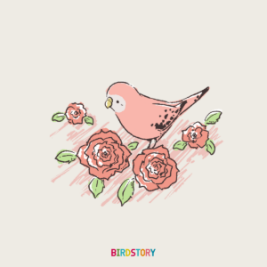 ローズの日 バラ薔薇アキクサインコ