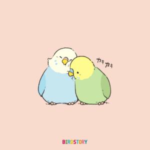恋人の日 セキセイインコイラスト