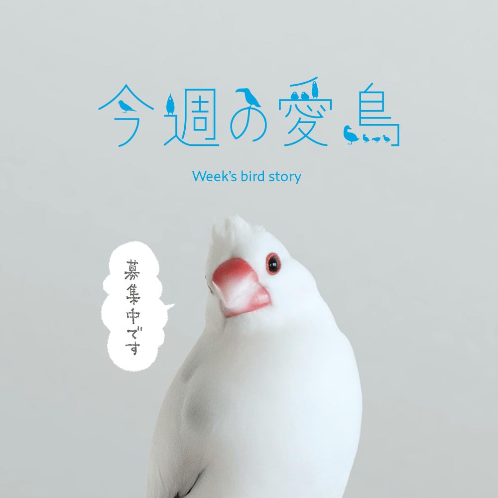 今週の愛鳥 募集中 BIRDSTORY