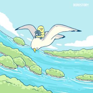 日本三景の日 宮城県の松島カモメ