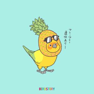 パイナップルの日 コガネメキシコインコ