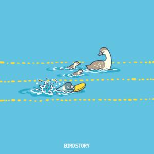 水泳の日 ボタンインコとカルガモ親子