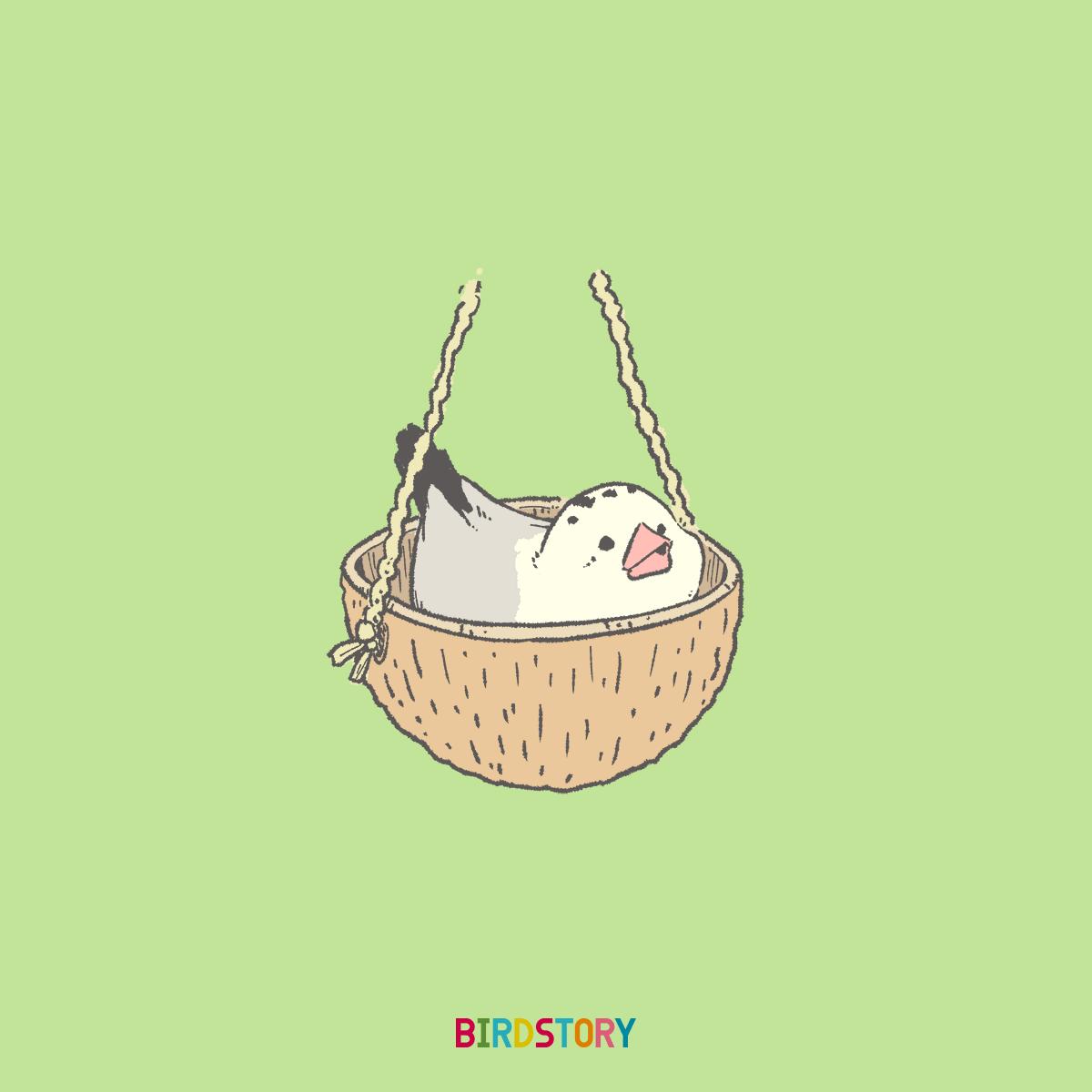 ベッドの日 ココナッツボウル文鳥