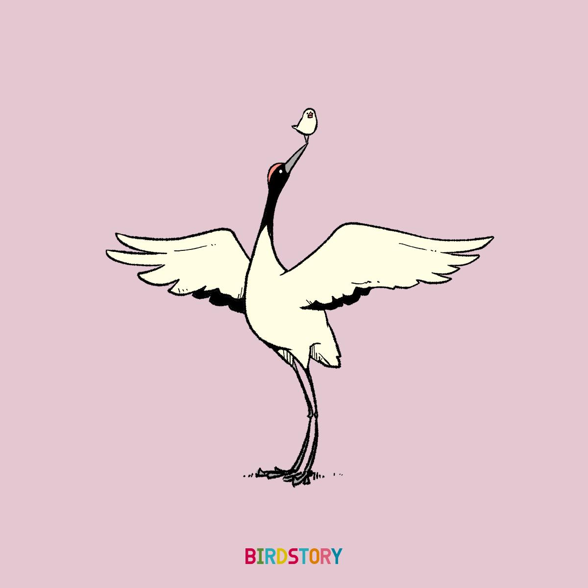 敬老の日 タンチョウヅル 鶴